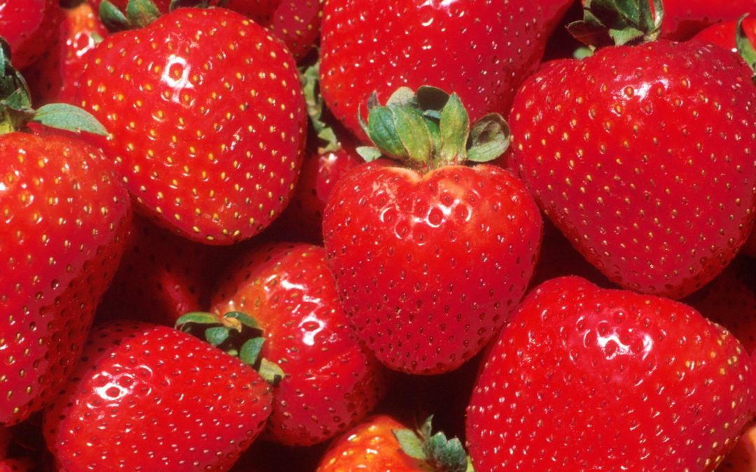 Chesapeake Strawberry Guide 2020